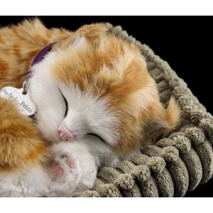knuffel-perfect-petzzz-soft-kat-orange-tabby-10584429