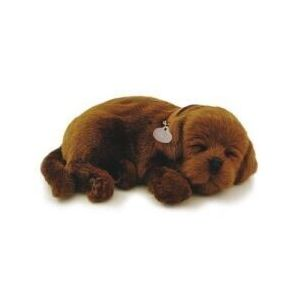 knuffel-perfect-petzzz-soft-hond-chocolate-lab-10584431