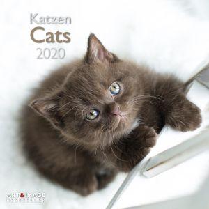 kalender-2020-30-x-30-cats-10922269