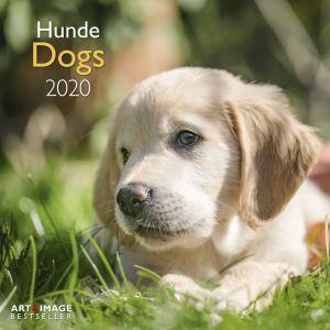kalender-2020-30-x-30-dogs-10922270