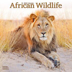 kalender-2020-african-wildlife-10924723